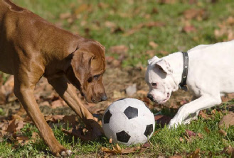 dogs-playing-soccer02