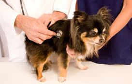 vet-exam-dog-h-border02